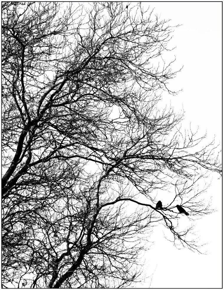 DSCN6326 boom met vogels zw canvas klein