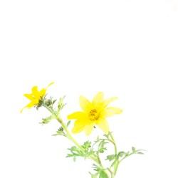 5-DSC7273 gele bloem
